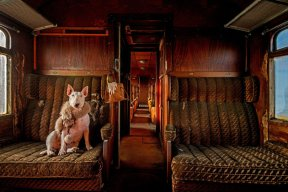 PIC FROM ALICE VAN KEMPEN/CATERS NEWS (Pictured: Claire travelling in an abandoned train in Belgium) - Talk about a pass-pawt! Meet the globetrotting dog who visits abandoned places and poses for photographs. Meet Claire, the three-year-old bull terrier who travels the world with Dutch photographer Alice van Kempen, 48, posing for photographs in abandoned buildings. Alice travels the world seeking out abandoned places to photograph in pursuit of her passion for urban exploring, taking her pooch as her trusted companion. SEE CATERS COPY