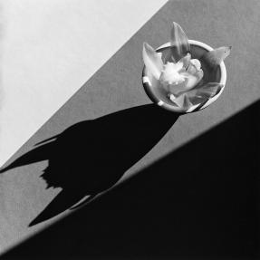 Orchid; Robert Mapplethorpe, American, 1946 - 1989; New York, New York, United States, North America; negative 1987; print 1989; Gelatin silver print; Image: 49.1 x 49.2 cm (19 5/16 x 19 3/8 in.), Sheet: 59.2 x 50.8 cm (23 5/16 x 20 in.), Mount: 59.2 x 50.8 cm (23 5/16 x 20 in.), Framed: 74.9 x 72.4 cm (29 1/2 x 28 1/2 in.); 2012.52.23